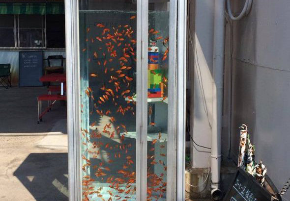 「金魚電話ボックス」が撤去されるとのニュースがありました