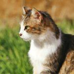 Catlogキャトログが欲しい!猫の活動を24時間記録する首輪
