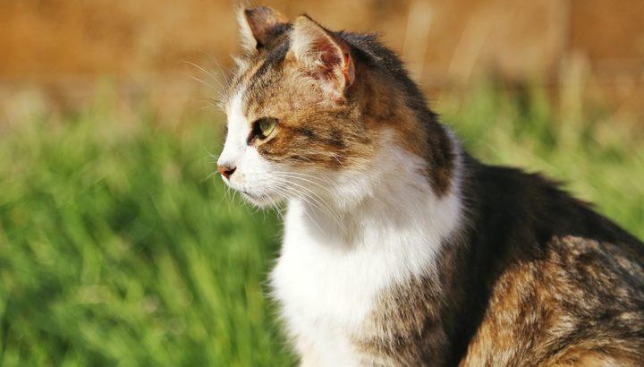 猫のウェアラブルデバイス「Catlog」キャトログ