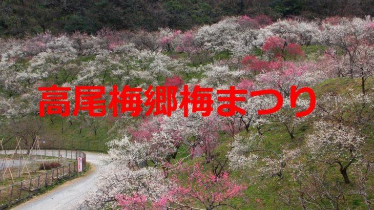 高尾梅郷梅まつり2019の開催期間や混雑状況まとめ!