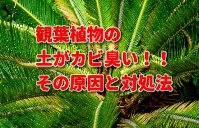 観葉植物のプランターの土がカビ臭い!!その原因と対処法