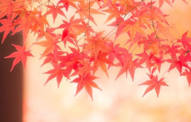 福岡大宰府|光明禅寺の紅葉時期やライトアップなどの情報まとめ