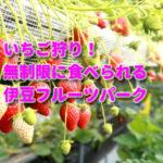 静岡県でいちご狩り!無制限に食べられる伊豆フルーツパークの紹介