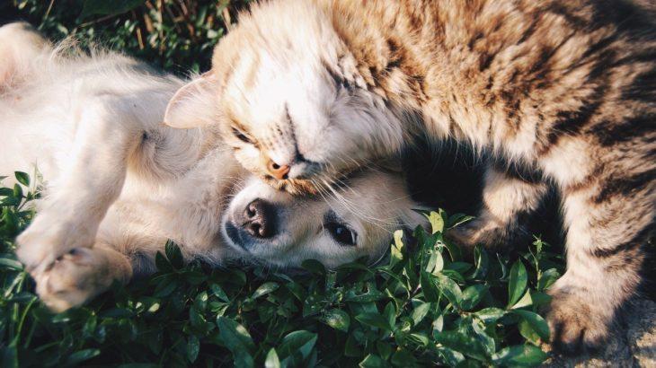 今さら聞けない!ネコは散歩がいらないから犬より飼うのがラクは本当!?